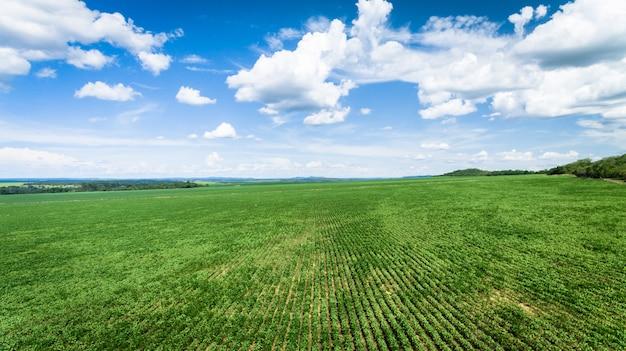 Vista aérea de uma fazenda com plantação de soja ou feijão.