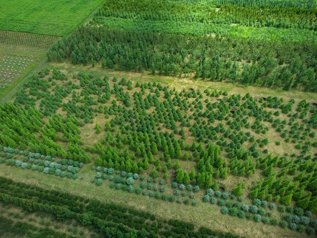 Vista aérea de uma fazenda de árvores para paisagismo