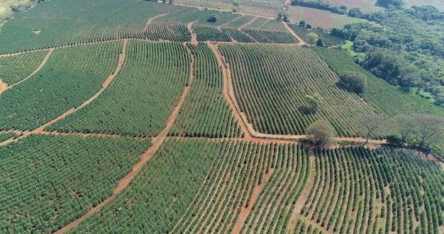 Vista aérea de uma fazenda de café. cafezal. produção de café. 4 k