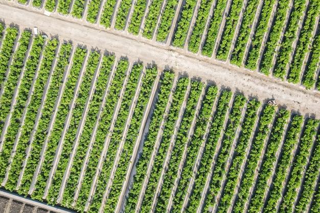 Vista aérea de uma fazenda verde com vegetais e frutas em changhua, taiwan