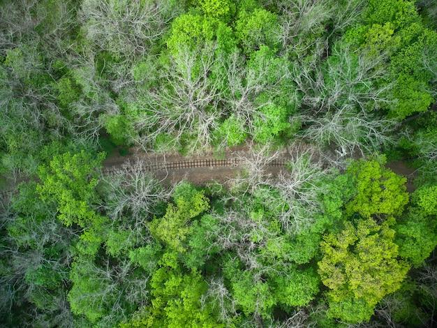 Vista aérea de uma ferrovia de trem na floresta verde