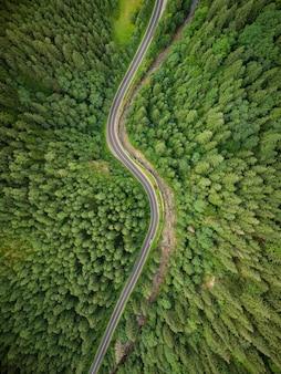 Vista aérea de uma floresta de coníferas por onde passa uma estrada sinuosa nas montanhas