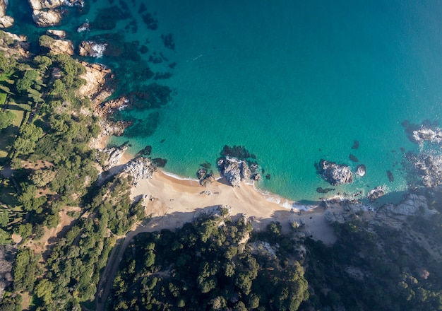 Vista aérea de uma floresta de pinheiros junto ao mar. isso é na costa brava no mediterrâneo