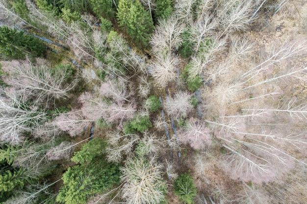Vista aérea de uma floresta densa com árvores nuas e profundas de outono e folhagem seca