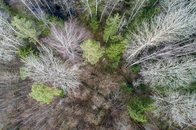 Vista aérea de uma floresta densa com árvores nuas e profundas de outono e folhas caídas no chão