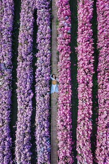Vista aérea de uma linda garota nos campos de flores de margaret