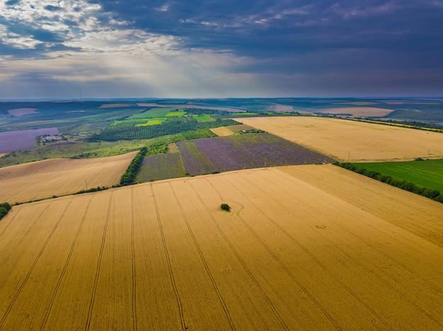 Vista aérea de uma paisagem com campo de lavanda e trigo