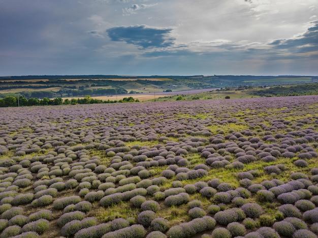 Vista aérea de uma paisagem com campo de lavanda