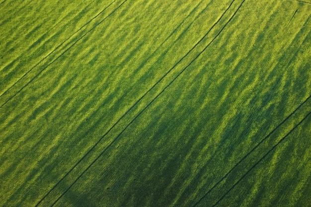Vista aérea de uma paisagem de campo agrícola, campo amarelo sem fim ao pôr do sol.