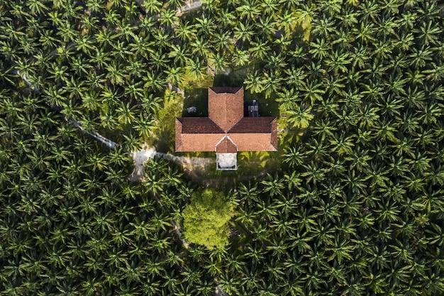 Vista aérea de uma palmeira em uma plantação de óleo de palma no sudeste da ásia