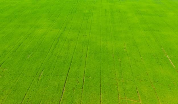 Vista aérea de voar drone de arroz de campo com paisagem verde natureza fundo, vista superior arroz de campo