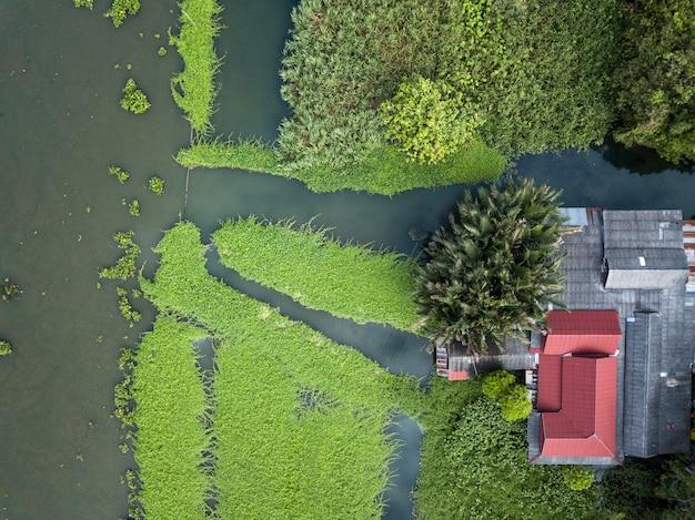 Vista aérea, de, water jacinto, cobertura, um, rio, em, tailandia