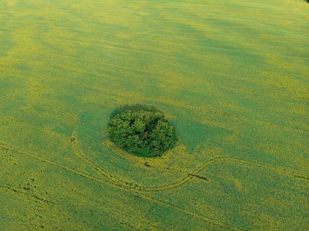 Vista aérea do campo cultivado de colza de drone pov