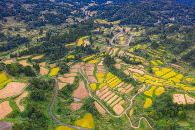 Vista aérea do campo de arroz terraço dourado em hoshitoge, niigata, japão