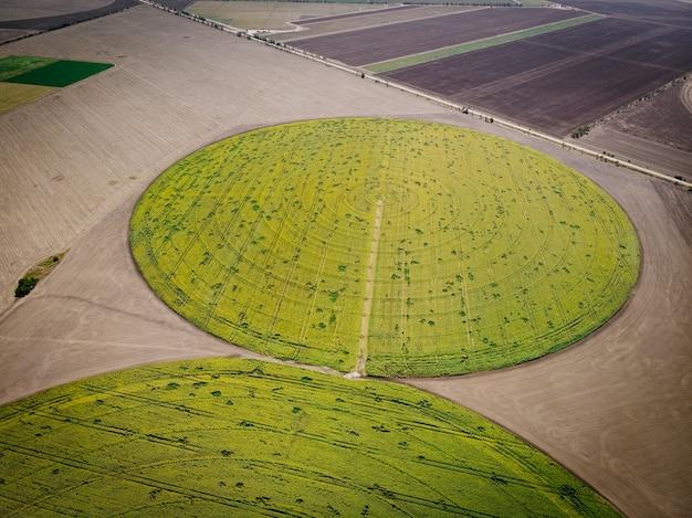 Vista aérea do campo de girassóis.