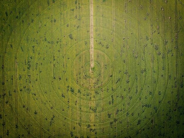 Vista aérea do campo redondo de girassóis florescendo com sistema de irrigação radial. vista de cima para baixo.