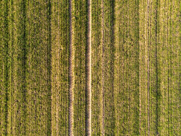 Vista aérea do campo verde do país com linhas de linhas na primavera com vegetação fresca