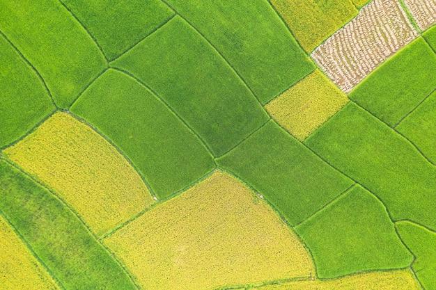 Vista aérea do campo verde e amarelo arroz paisagem padrão diferente na manhã no norte da tailândia