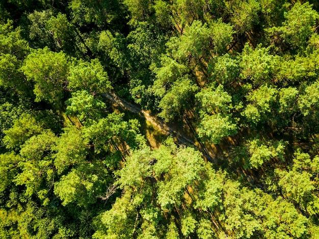 Vista aérea do drone da floresta de folhagem ecológica com uma estrada de terra em um dia ensolarado de verão. vista do topo