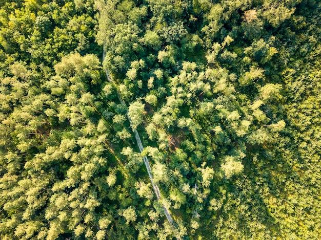 Vista aérea do drone de uma estrada de terra, passando por uma floresta de árvores verdes. conceito de conservação do ecossistema. vista do topo.