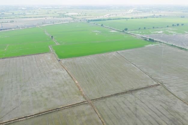 Vista aérea do drone voador da paisagem do campo de arroz