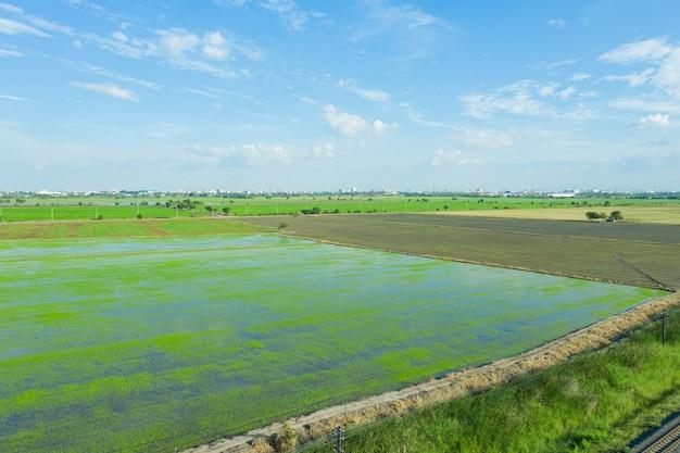 Vista aérea do drone voador de arroz de campo com natureza de padrão verde de paisagem