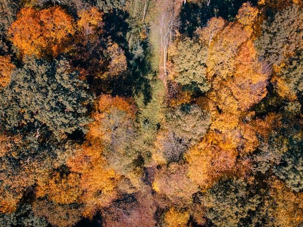 Vista aérea do parque outono com lago