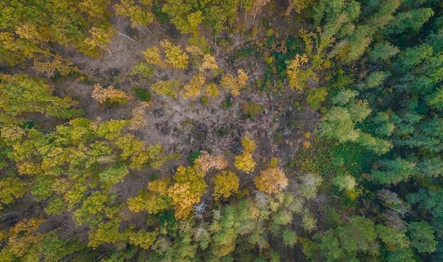 Vista aérea do rio e da floresta no outono