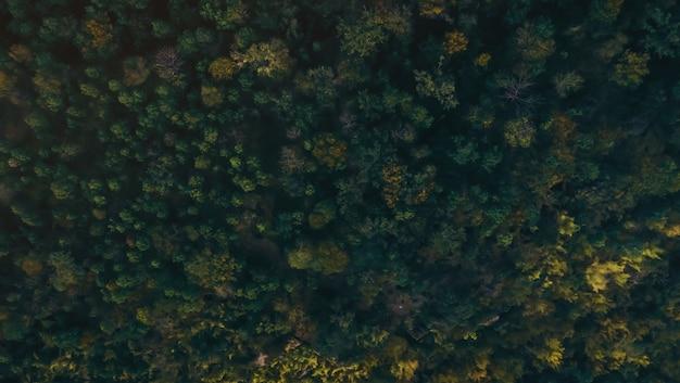 Vista aérea do zangão da floresta
