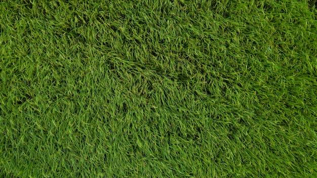 Vista aérea do zangão de campos de arroz na zona rural