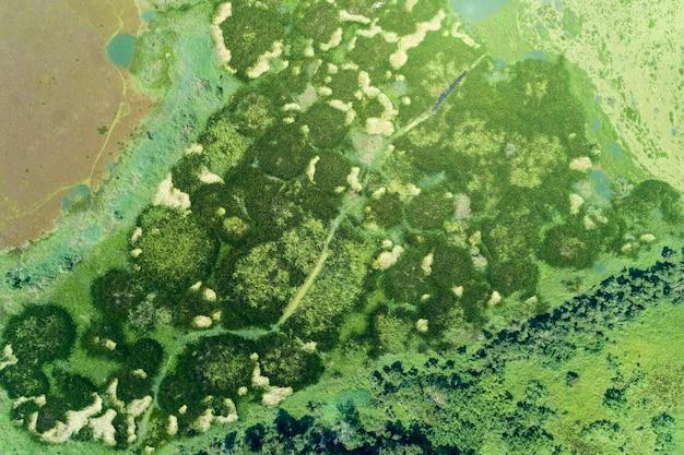 Vista aérea, drone, tiro, cima baixo, de, verde, floresta, e, lago