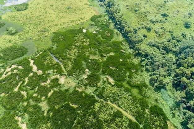 Vista aérea, drone, tiro, topo baixo, de, verde, floresta, e, lago, bonito, natureza selvagem, paisagem