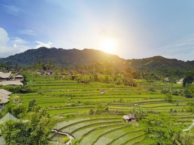 Vista aérea em terraços de arroz. indonésia. bali.