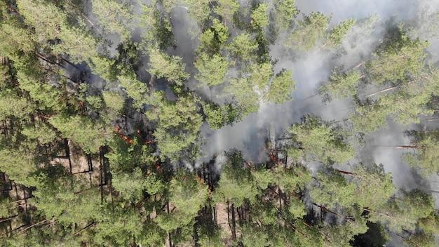 Vista aérea épica de fumar fogo selvagem. grandes nuvens de fumaça e propagação de fogo. desmatamento de floresta e selva tropical. incêndios florestais na amazônia e na sibéria. queima de grama seca. mudanças climáticas, ecologia, terra