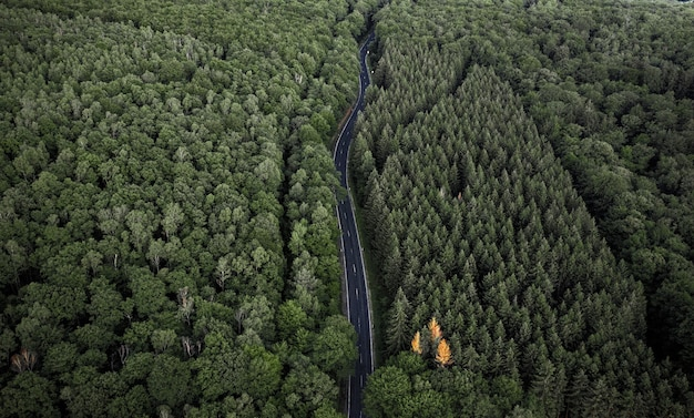 Vista aérea hipnotizante da estrada cercada por densa floresta
