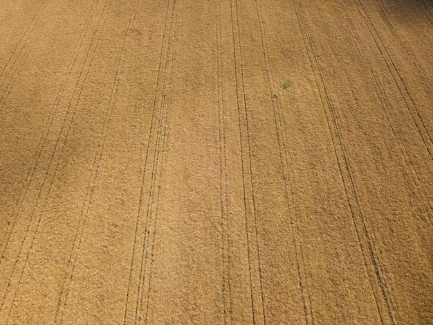 Vista aérea o enorme campo de colza maduro em um dia ensolarado de verão