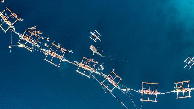 Vista aérea, oslob, tubarão baleia, observar
