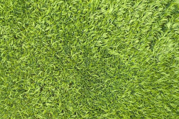 Vista aérea superior do campo de trigo verde.