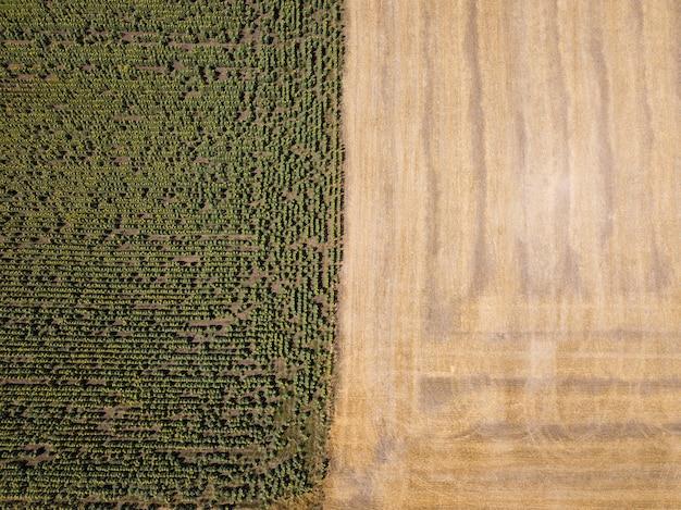 Vista aérea superior do zangão para campos de girassol e trigo