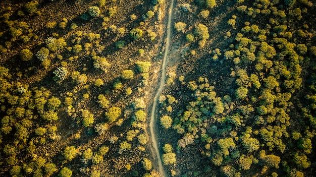 Vista aérea vertical da paisagem com plantas, solo e caminho no meio