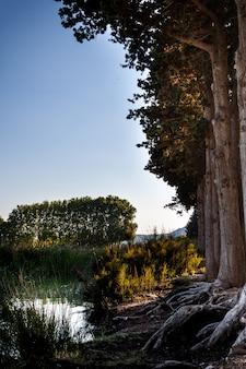 Vista agradável e tranquila ao lago com árvores