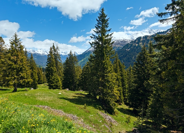 Vista alpina com flores-dente-de-leão amarelas na encosta da montanha no verão (áustria)