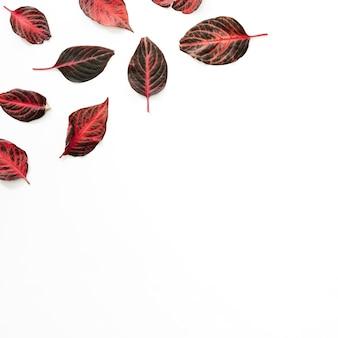 Vista alta ângulo, de, avermelhado, folhas, branco, fundo