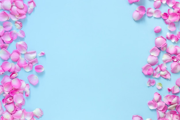 Vista alta ângulo, de, cor-de-rosa, pétalas rosa, ligado, azul, fundo