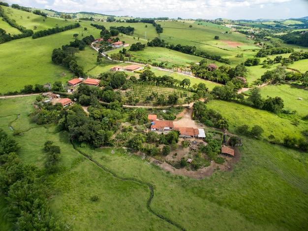 Vista ao campo de lúpulo verde com plantas amarradas preparadas para a colheita.