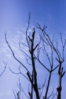 Vista baixa ângulo, de, árvore nua, contra, céu