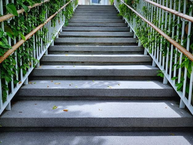 Vista baixa ângulo, de, escadaria, com, fresco, verde, plantas, atrás de, grades