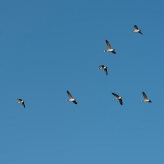 Vista baixa ângulo, de, pássaros voando, em, a, céu, kenora, lago, de, a, madeiras, ontário, canadá
