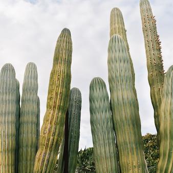 Vista baixa ângulo, de, planta suculenta