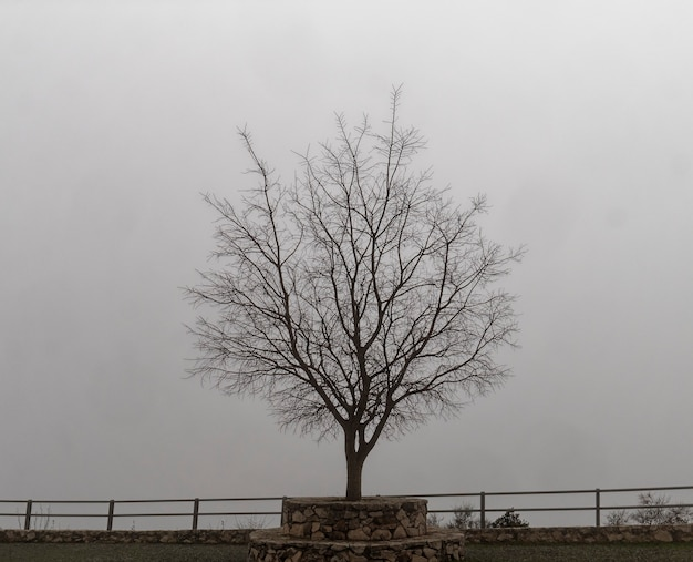 Vista da árvore morta com um fundo nebuloso.